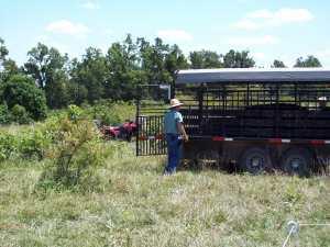 Bull Bus